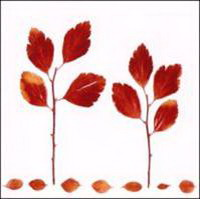 va - autumn leaves (2009)